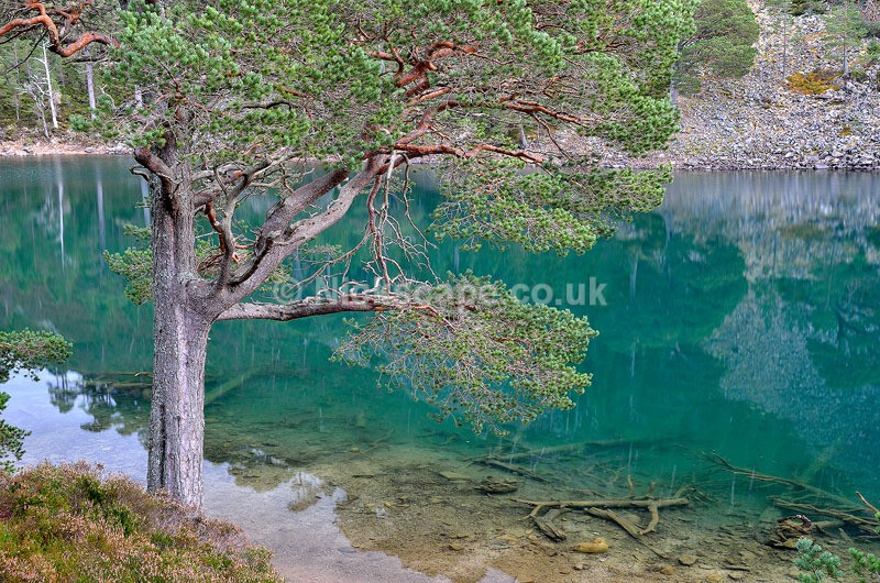 An Lochan Uaine the Green Loch in the Glenmore Forest near to Aviemore in the Cairngorms National Park