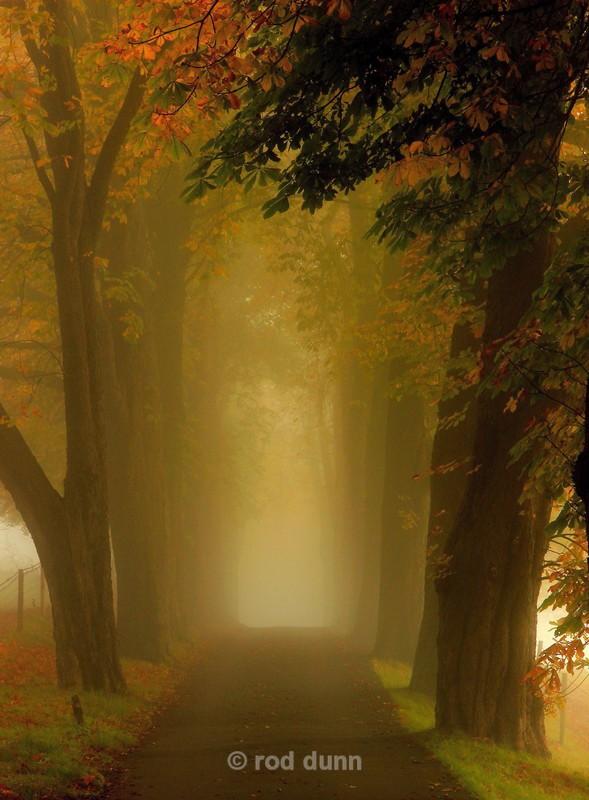 Avenue of chestnut trees - Peak District