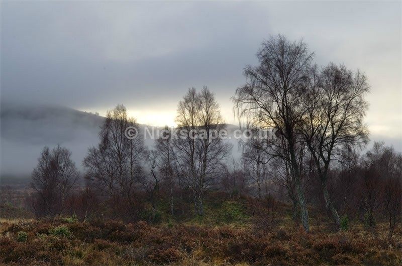 Misty Abernethy Forest | Aviemore | Cairngorms Photo Gallery | Scotland
