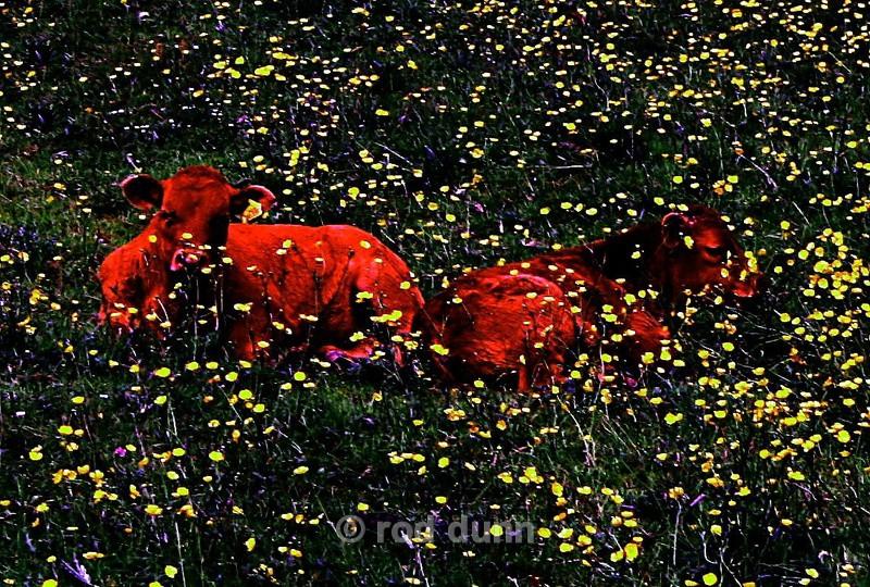 The Sleeping Giants - art images